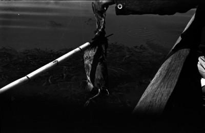 Individuo cazando una ave en un lago