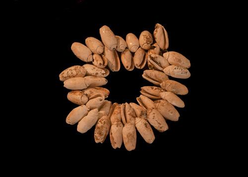 Collar de placas de concha