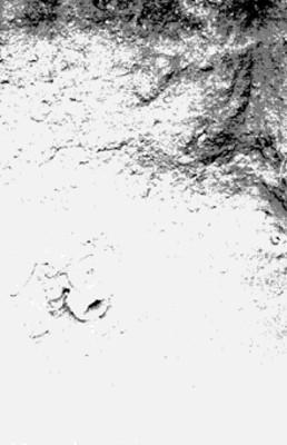 Vista de fragmentos de cráneos al interior de una excavación