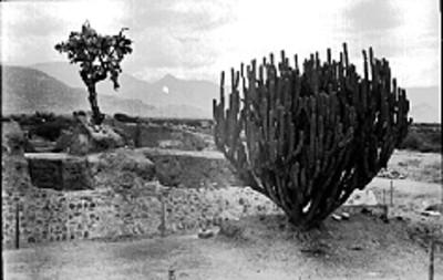Vista de los trabajos de restauración de un basamento piramidal en Lambityeco