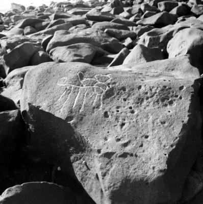 Petroglifo procedente de Las Labradas