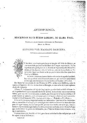 Antropología.- Descripción de un hueso labrado, de llama fósil, encontrado en los terrenos posterciarios de Tequixquiac, Estado de México.- Estudio.
