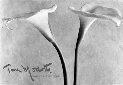 Exposición fotográfica Tina Modotti
