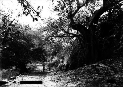 Hombres caminan en medio de un bosque