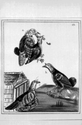Lámina del Códice Florentino que muestra animales, reprografía