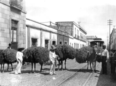 Grupo de arrieros transitan por una calle