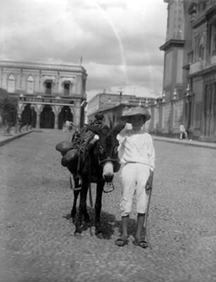 Niño con burro transporta cocos