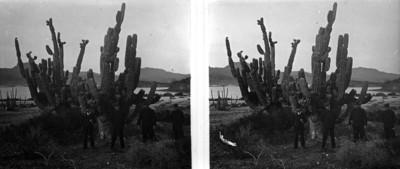 Oficiales posan de pie junto a cactáceas en la bahía de Guaymas, retrato de grupo