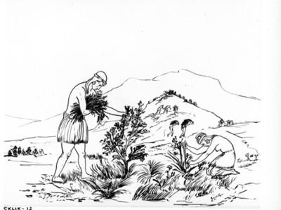"""Ilustración referente a la """"recolección de frutas"""" durante periodo Preclásico, reprografía"""